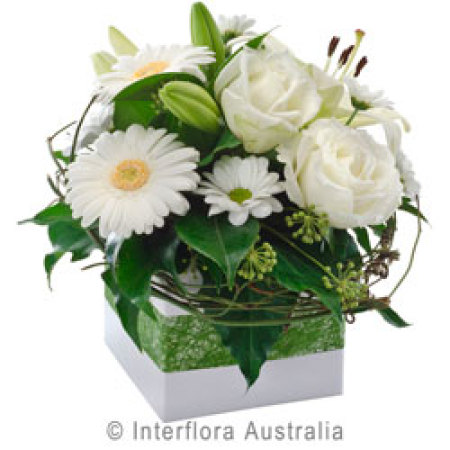 Hope  Box of Elegent White Flowers