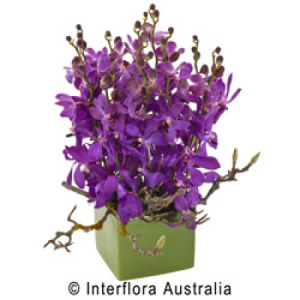 Ceramic Pot of Vanda or Singapore Orchids